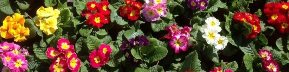 Cuidado plantas de interior viveros el tejar for Viveros plantas de interior