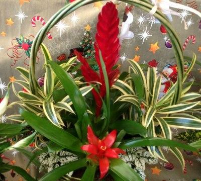 centro regalo varios cactus en maceta centro floral - Composiciones Florales