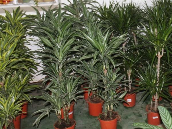 Plantas interior viveros el tejar - Plantas de interior duraderas ...