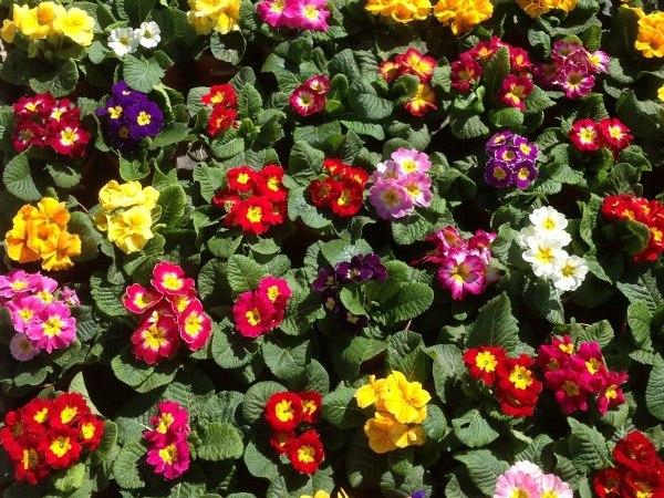 Plantas exterior viveros el tejar for Plantas exterior